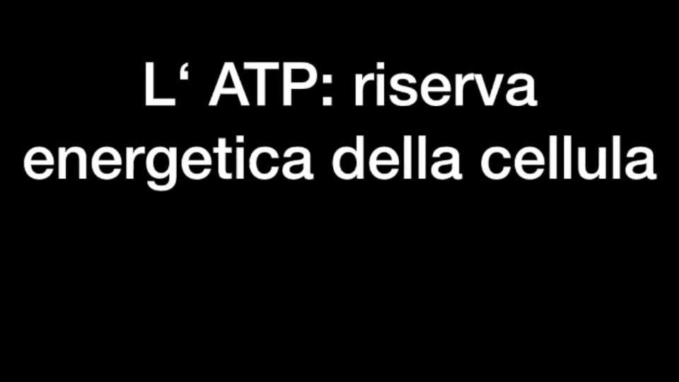 L'ATP come risorsa energetica