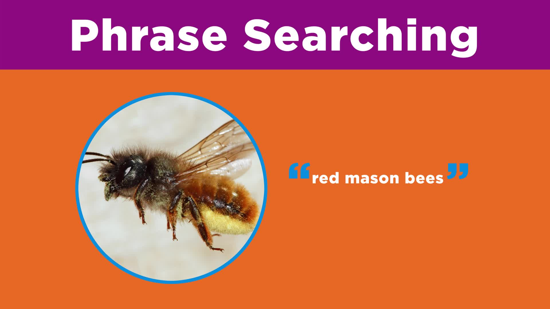 Searching Effectively: Phrase Searching & Truncation
