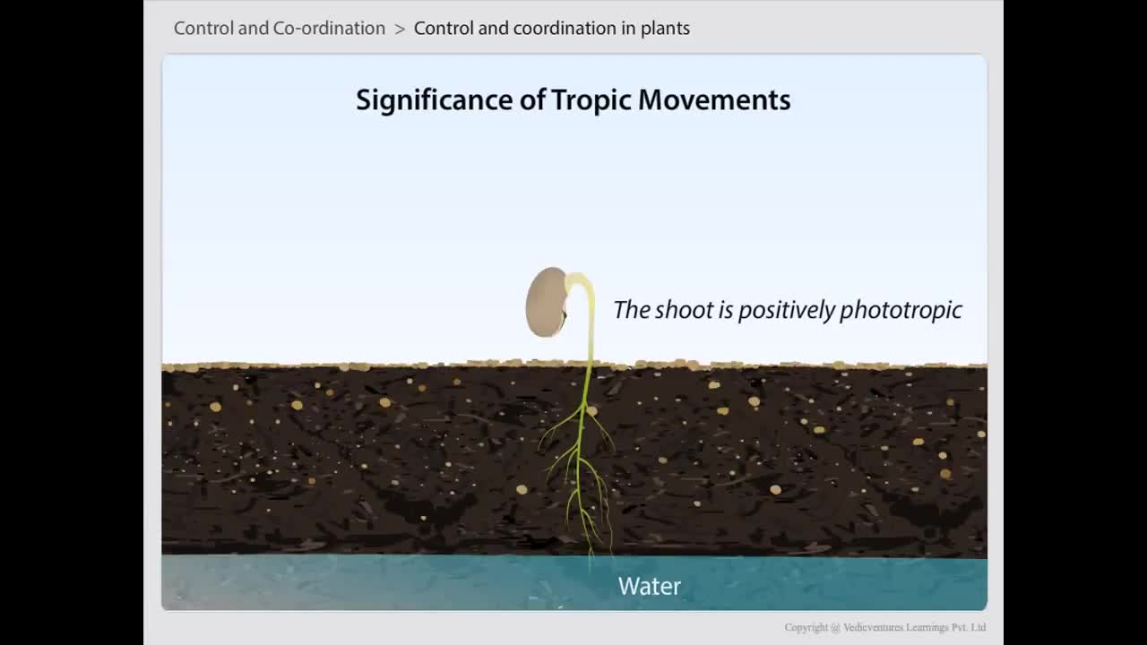 Types of tropisms | Control and Coordination in plant | CBSE Class 10 Science