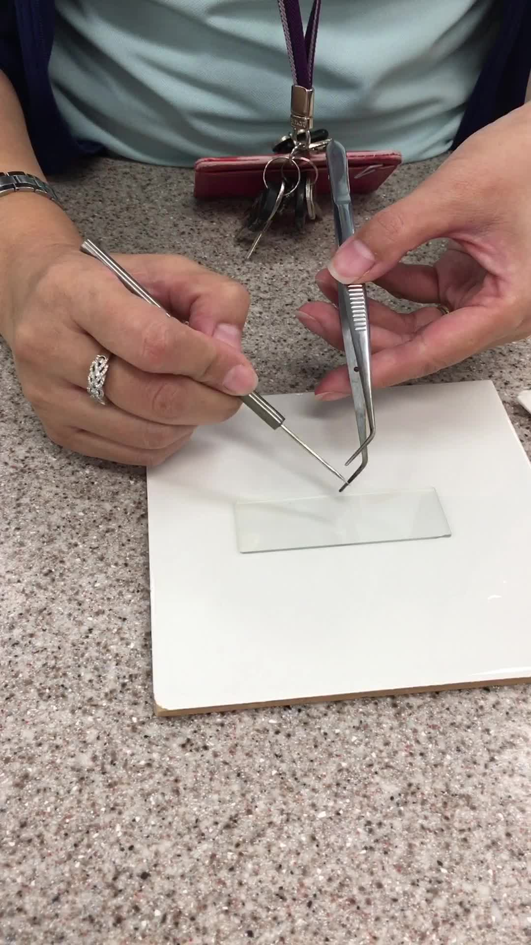Yr 7 MYP Microscope slide prep