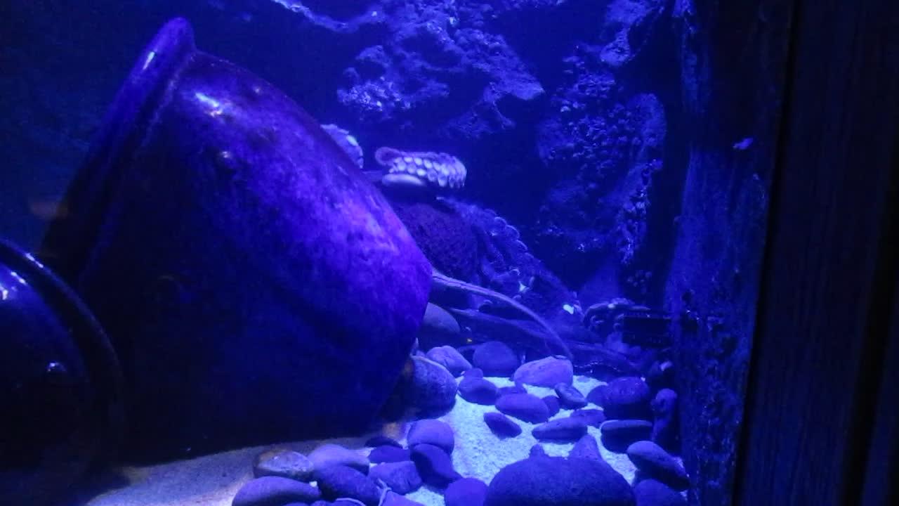 Aquarium - Octopus