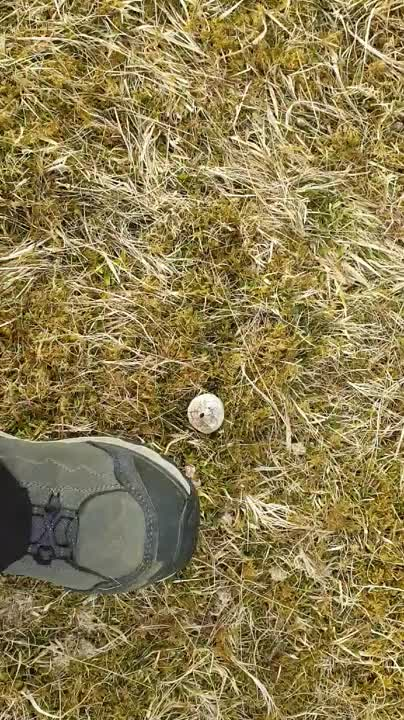Puffball Mushroom