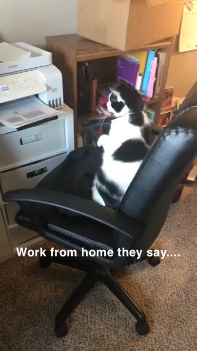 Work Assistant