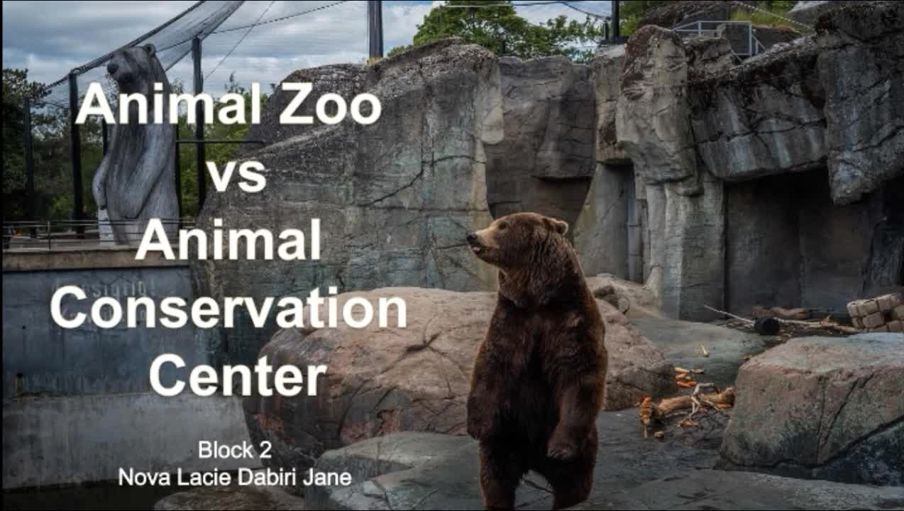 Student Documentary 001: Animal Zoos v. Animal Conservations
