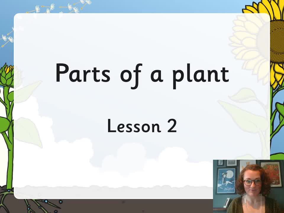 Y3 Plants - the function of leaves
