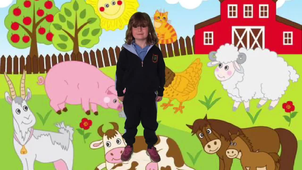 Junior Infants- The Farm