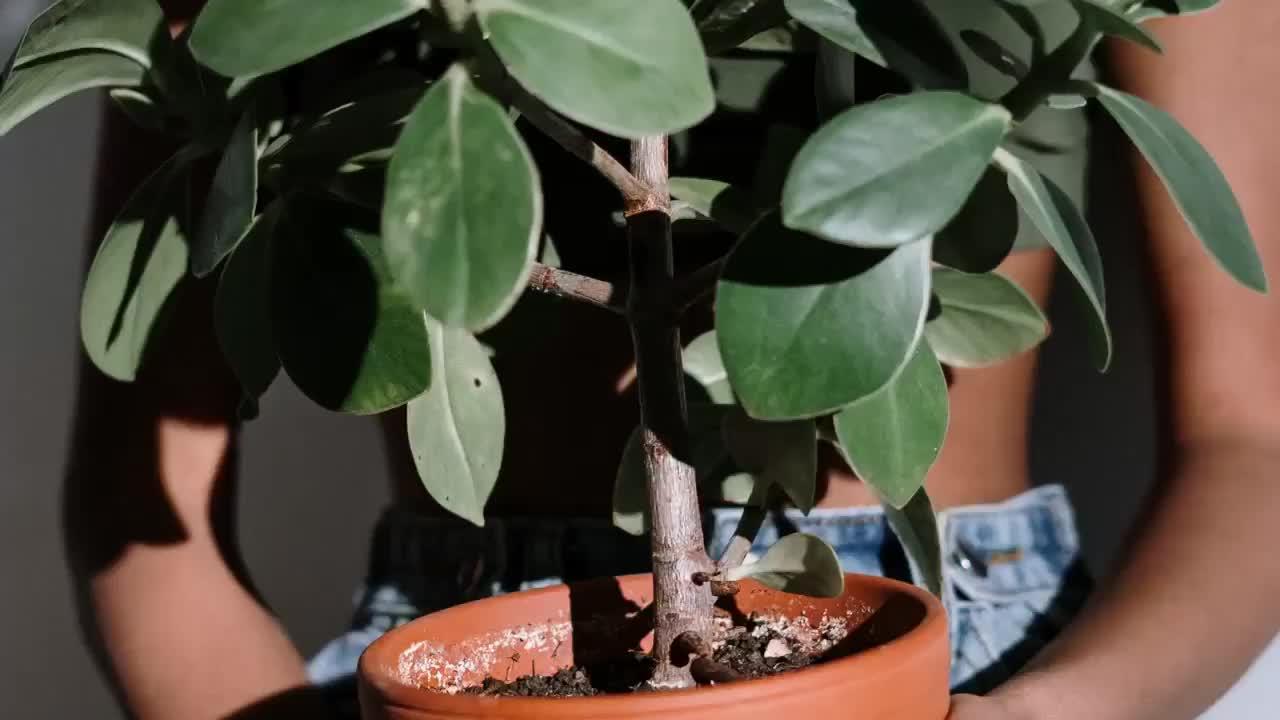 Tips and Tricks to Prevent Terrarium