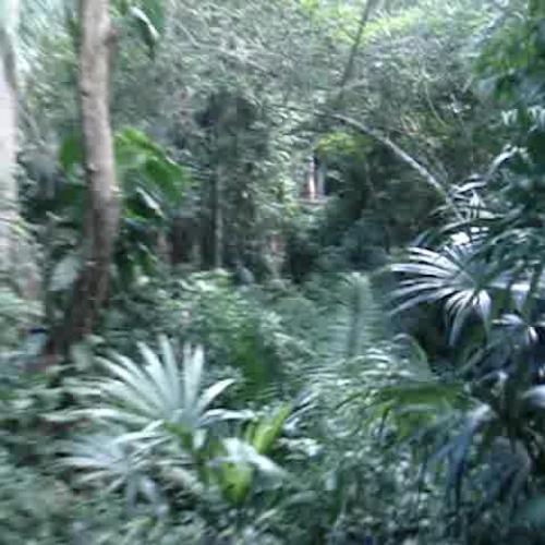 Zipline in Guatemala