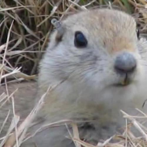 Go nuts 4 squirrels