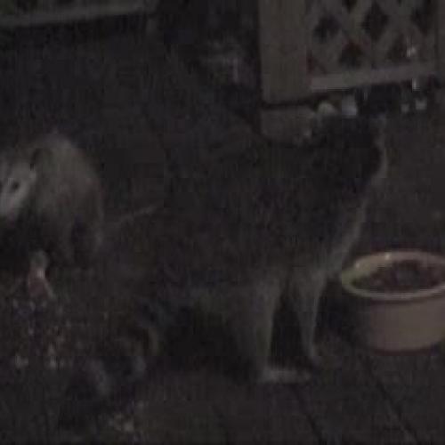 Critters Part III