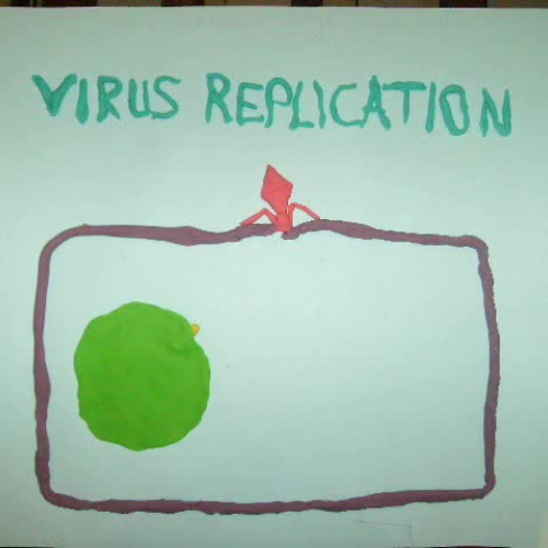 Viral infection and replication