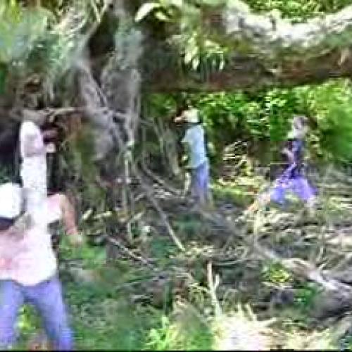 Tairua School Bush Area