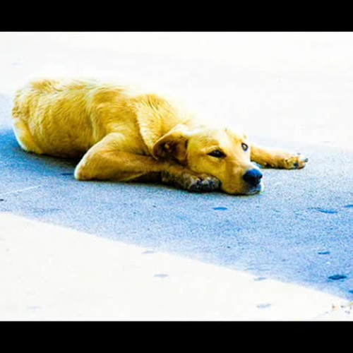 Animal Shelter Commercial