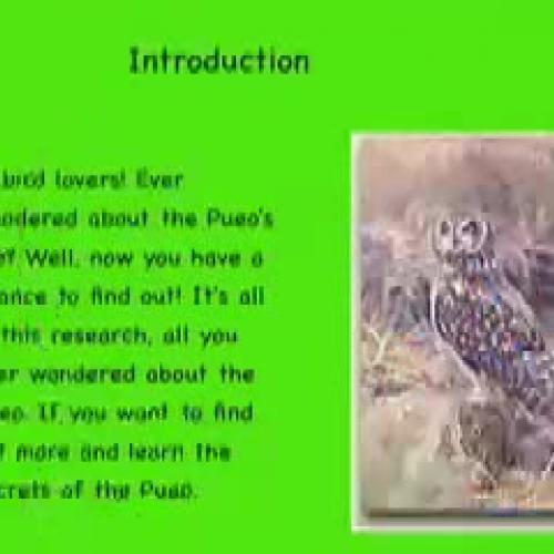 The Fascinating Pueo of Oahu by Kohana