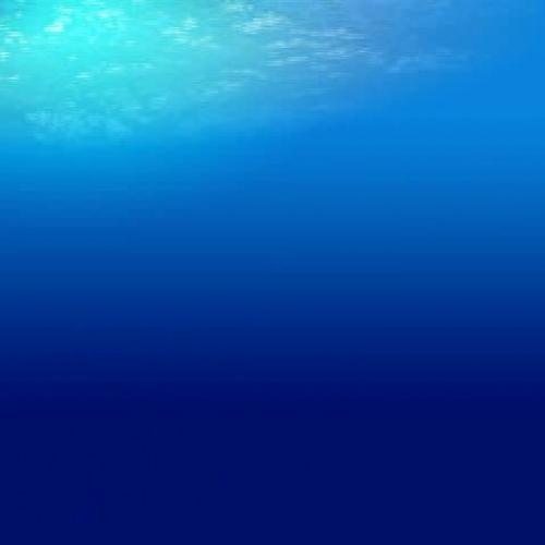 Animated Dolphin