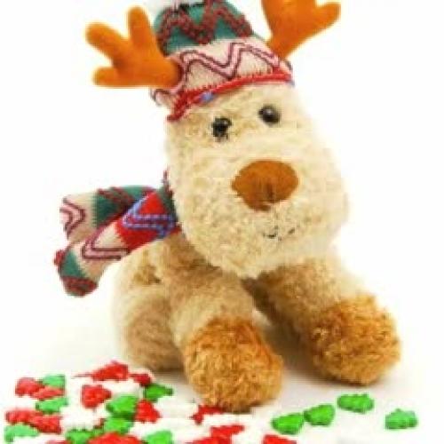 Holiday & Reindeer