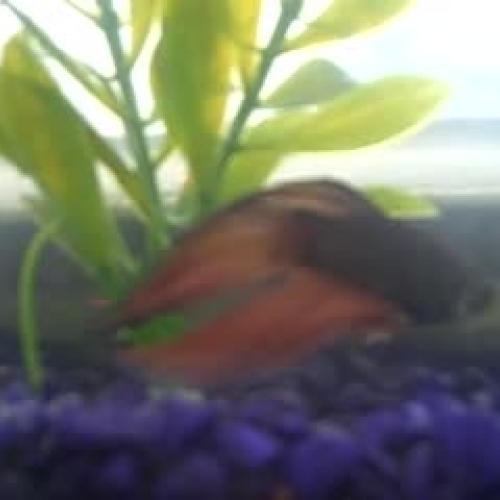 Name Fish