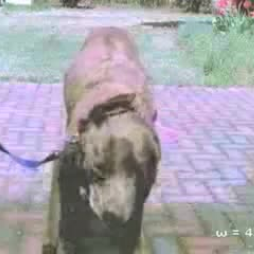 The Wet Dog Adaptation