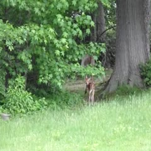 Baby Deer and Mom Found Each Other Again