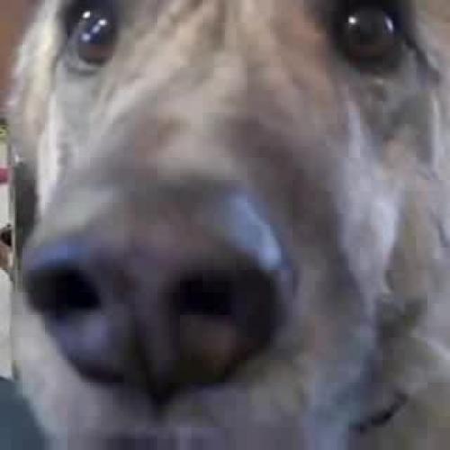 One Sad Dog