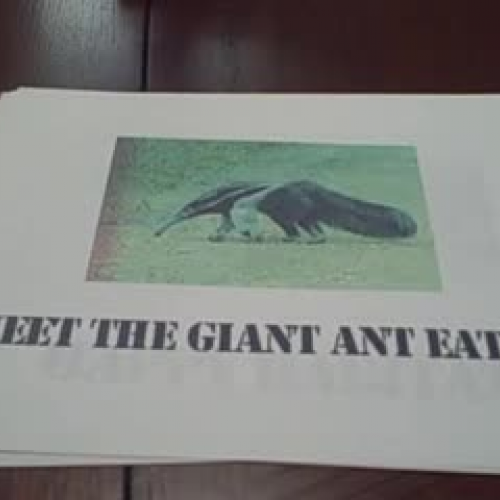 The Giant Anteater