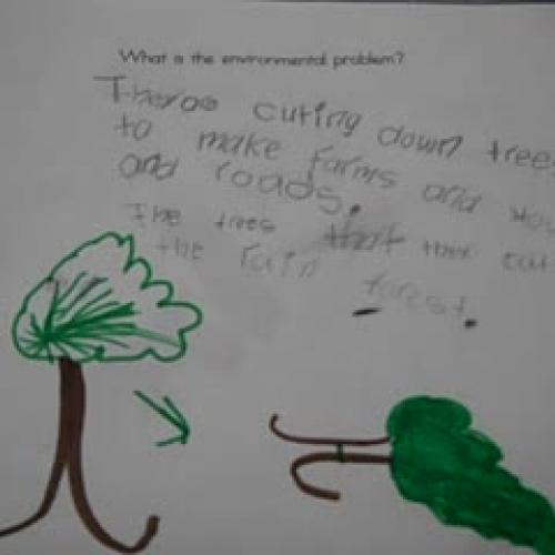 environmental issue 4
