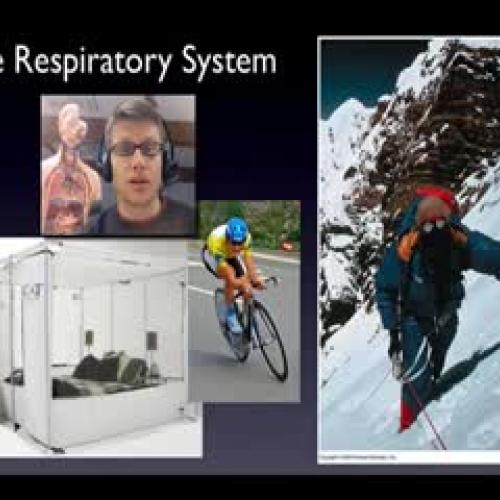Respiratory System - Bozeman Biology