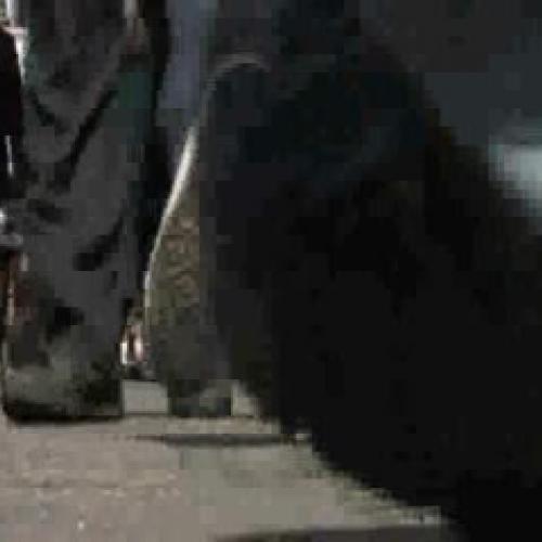 DJShannonSp2011