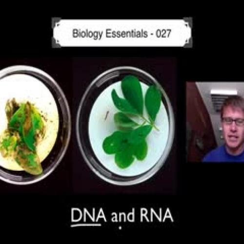 DNA and RNA Part 1 - Bozeman Biology