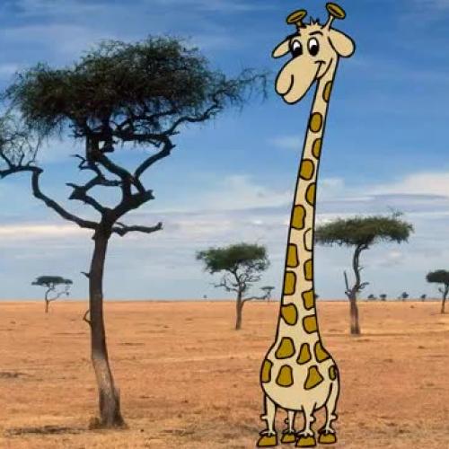 Natural Selection Giraffe