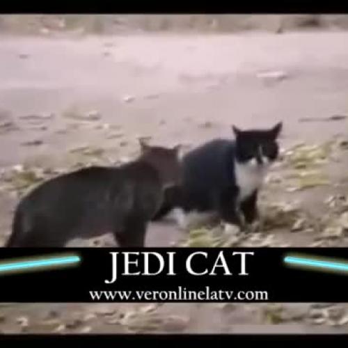 Jedi Cats - La Saga