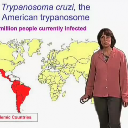 T. cruzi causes Chagas? disease