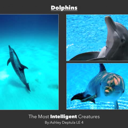 Dolphins Are the Smartest Animalsmov