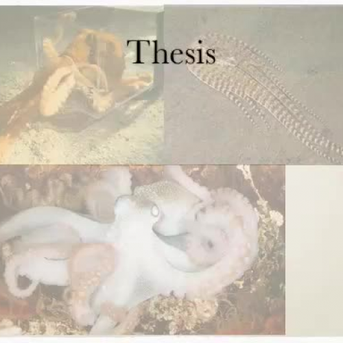 Research Presentation Octopus