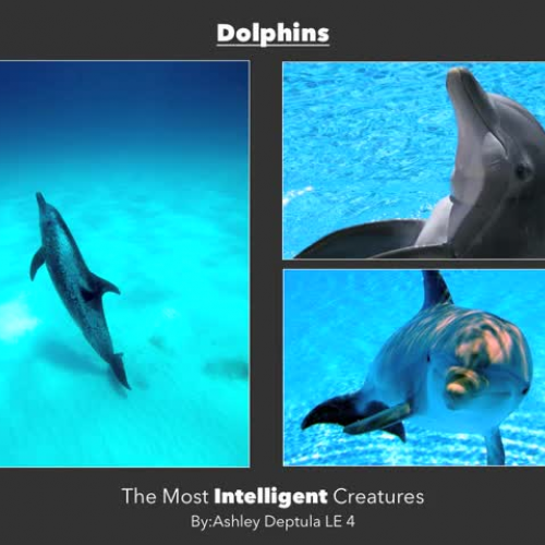 Dolphins are the most Intelligent Creatures