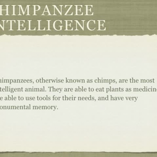 The Intelligence of Chimpanzees