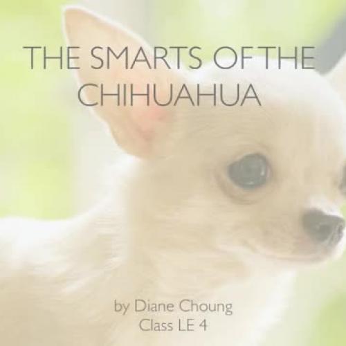 Research Presentation Chihuahuas