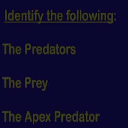 Predator vs Prey - Animal Face-Off