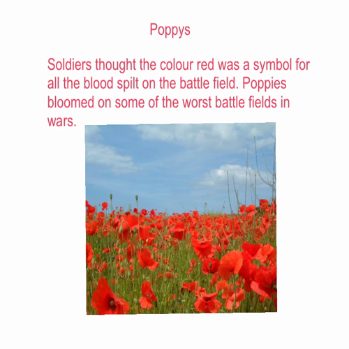 traditions of remembrance day