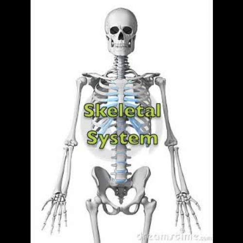 Emergency Medical Technician Preparatory Anatomy Physiology - Skeletal System