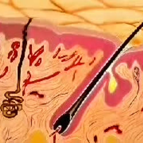 The Human Skin Animation