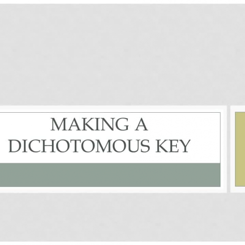 Making a Dichotomous Key