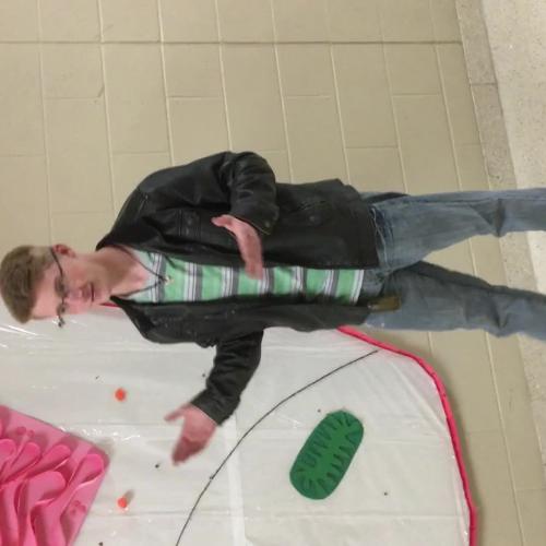 Kevin ribosomes