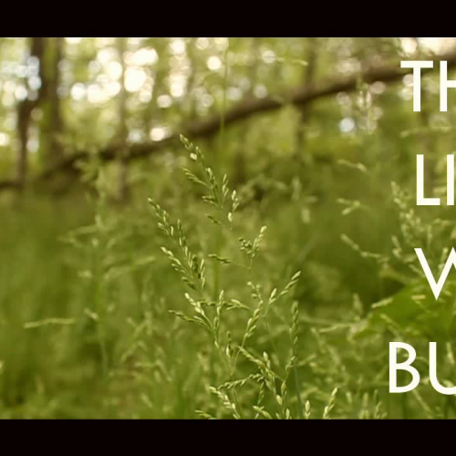 Student Book Promo - The Life We Bury