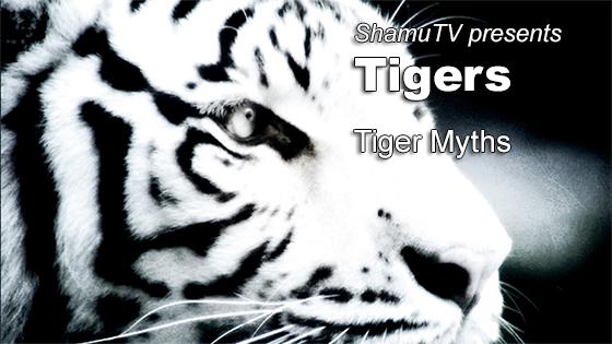 ShamuTV: Tigers - Tiger Myths