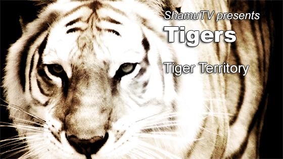 ShamuTV: Tigers - Tiger Territory
