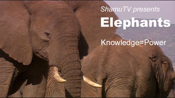ShamuTV: Elephants - Knowledge=Power