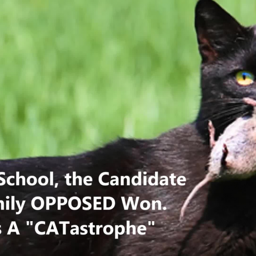 Cats & Dogs Election?