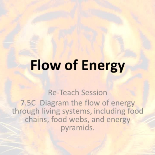 7.5C Flow of Energy Digital ReTeach
