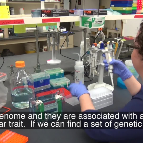 Beef Cattle Genomics